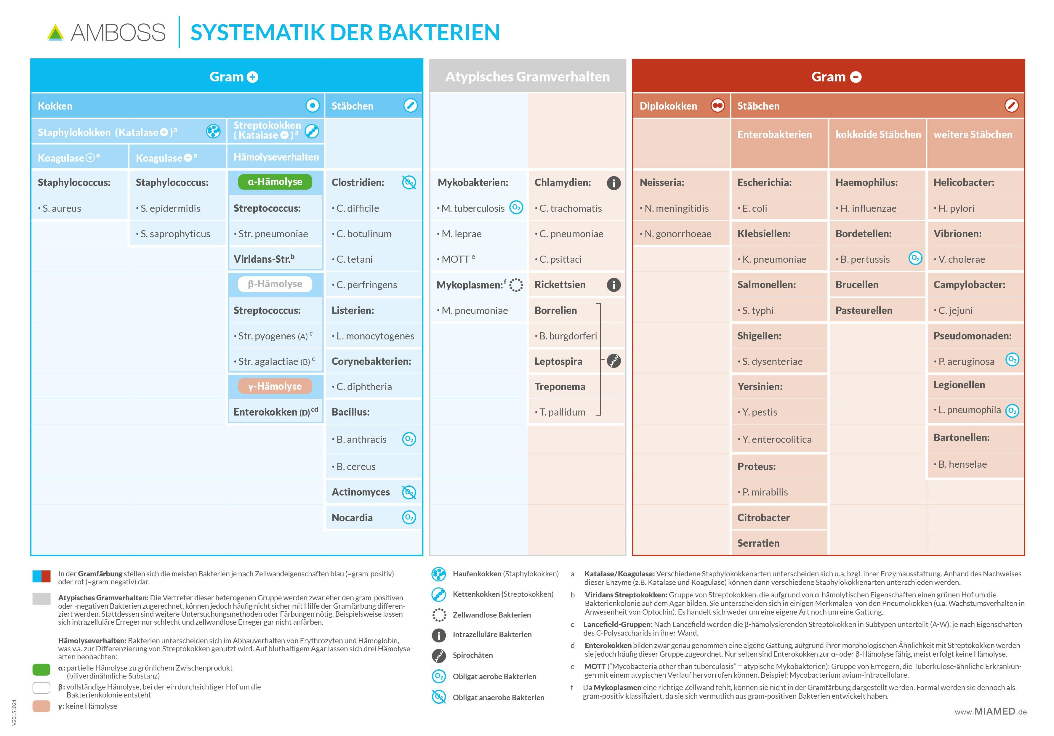 AMBOSS-Systematik-der-Bakterien