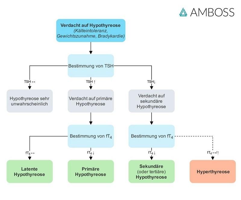 amboss-flowchart-diagnostisches-vorgehen-bei-verdacht-auf-hypothyreose