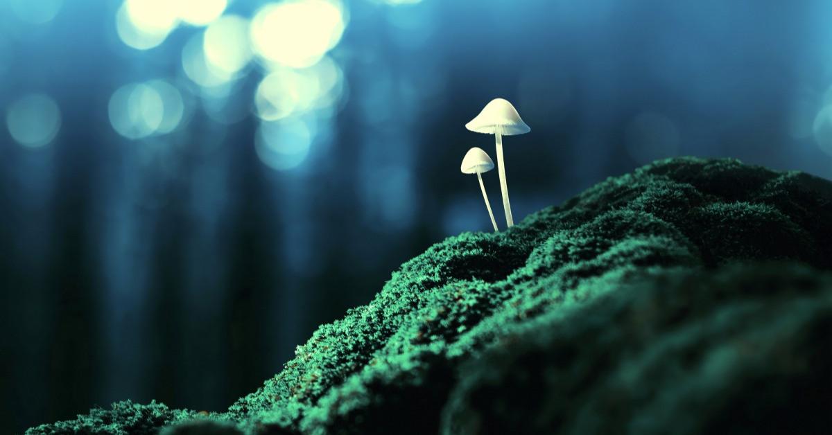 AMBOSS Medizin Blog Mit Pilzen aus der Depression?