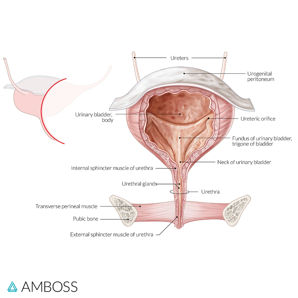 11 High-Yield Topics You Can Expect On The OB/GYN Exam